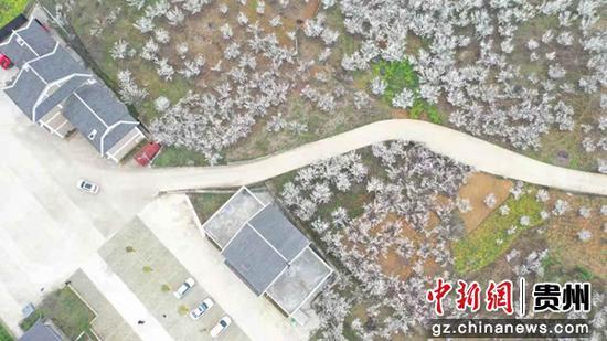 图为航拍安龙县普坪镇鲁沟塘居委会玛瑙红樱桃种植基地一角。