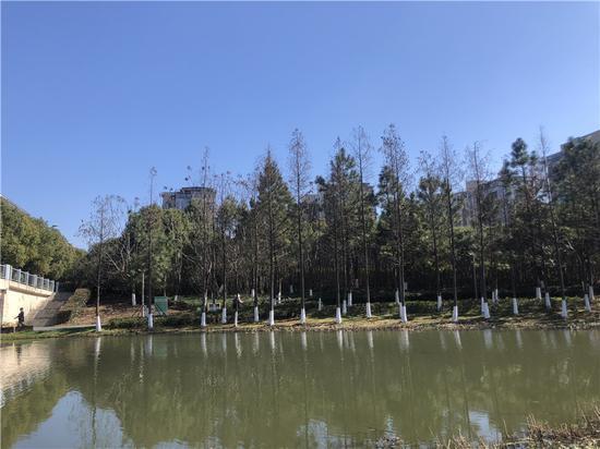 宁波一公园入春当天景色。林波 摄
