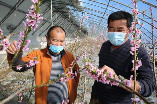 果农邵明玉与村民一起查看蜜蜂授粉情况 。华岩明摄
