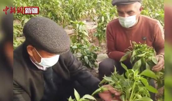 """新疆喀什""""大棚经济""""托起增收大希望"""