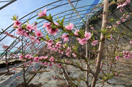 花朵满枝,竞相争艳 。华岩明摄