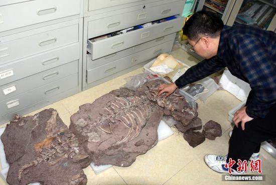 中国发现2.5亿年前九峰吐鲁番兽