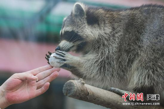 """天津:动物尽享""""元宵大餐"""""""