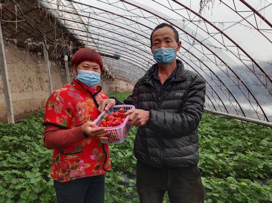 察布查尔县大力发展特色种植业 引领农民增收致富
