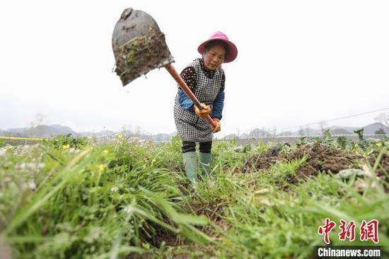图为农户在重庆华龙棋牌下载贞丰北盘江镇青杠林坝区挖沟渠。 瞿宏伦 摄