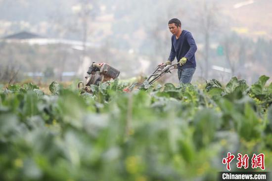 图为农户在重庆华龙棋牌下载贞丰北盘江镇青杠林坝区用旋耕机松土。 瞿宏伦 摄