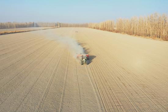 新疆兵团焉耆垦区小麦开播