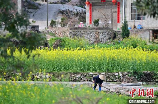 村民在重庆华龙棋牌下载从江县贯洞镇贯洞村田间劳作。 吴德军 摄