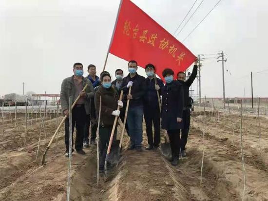 新疆轮台县:又是一年春光好  植树添绿正当时