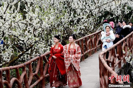 图为游客在赏李花。黄庆松