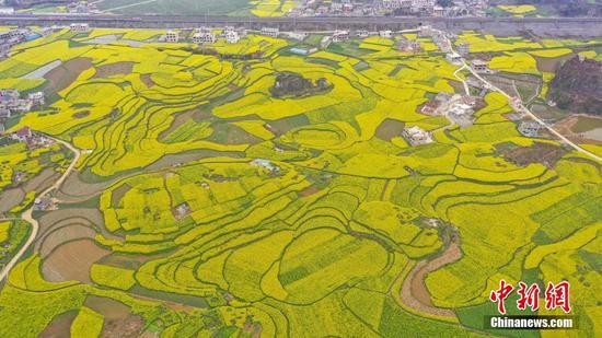 航拍贵州六枝万亩油菜花田
