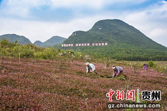 杨武乡大屯河现代高效农业示范园 袁琴书摄