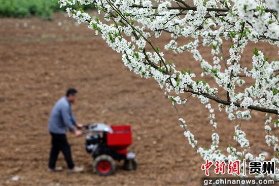 贵州黔西:花间农忙