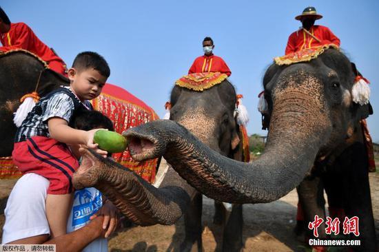 当地时间3月13日,泰国大城府举行大象日庆?;疃?。图为小朋友喂食大象。