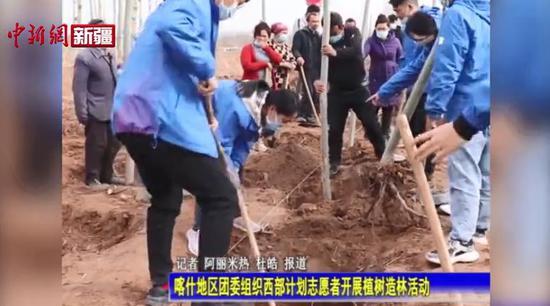 共青团喀什地区委员会组织西部计划志愿者开展植树造林活动