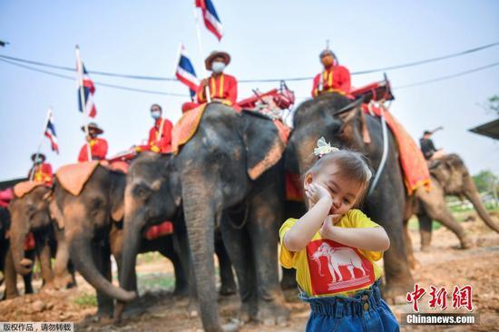 当地时间3月13日,泰国大城府举行大象日庆?;疃?。图为小朋友站在象群前面摆造型合影。