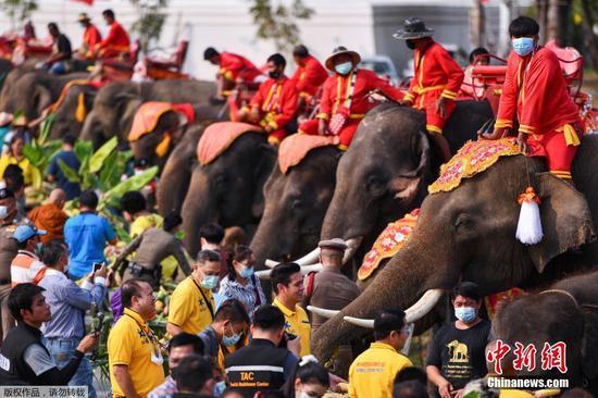 当地时间3月13日,泰国大城府举行大象日庆?;疃?。图为民众近距离与大象们接触。