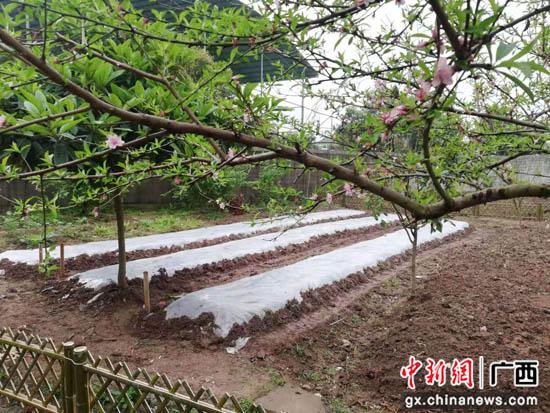 """桂林叠彩区打造""""三微"""" 把大树下的""""小日子""""过成诗"""