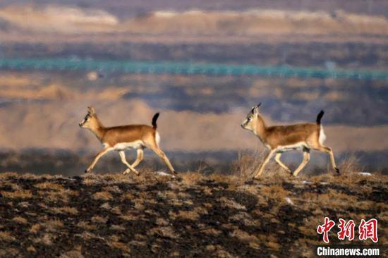 """新疆克拉玛依市郊成野生动物""""乐园"""""""