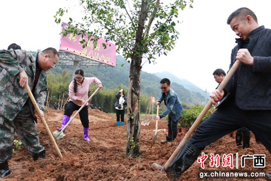 广西桂林平乐县开展全民植树活动