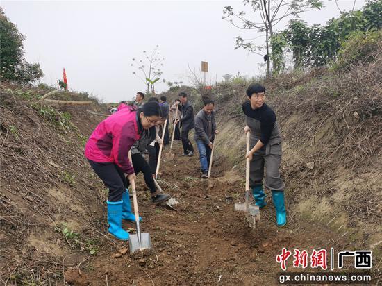 横县栽花植树修水利 兴产助农促振兴