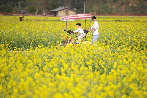 贵州贵定金海雪山万亩油菜花引游人
