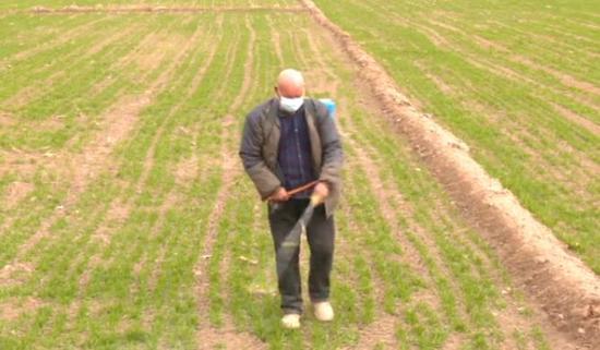 喀什做好冬小麦田间管理 确保粮食增产增收