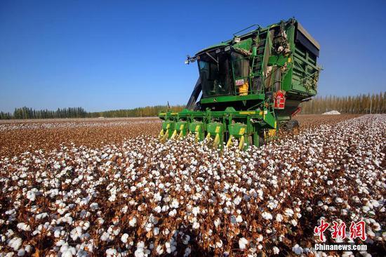新疆棉花:世界顶级 中国自己还不够用