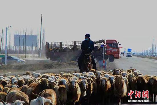新疆裕民县30万只(头)牲畜开启春季转场