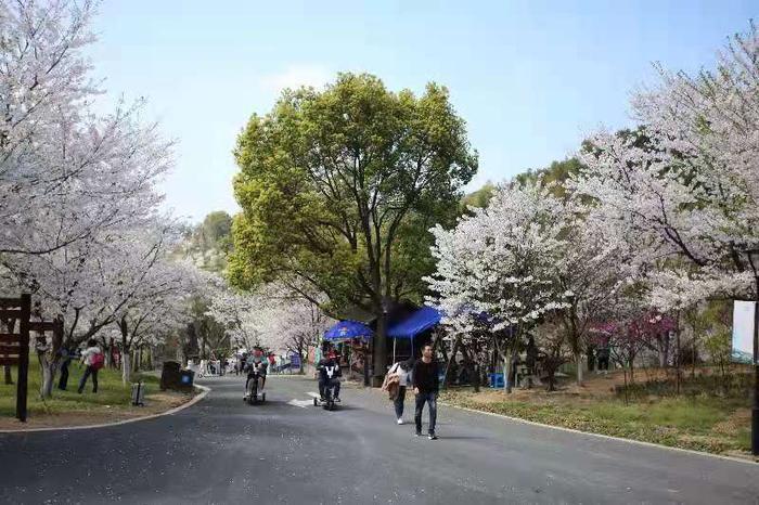 民众赏花现场。王溪 摄