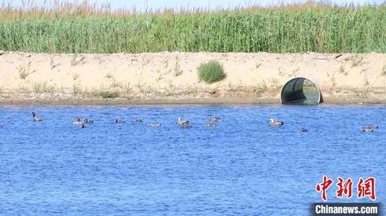 湿地内,众多鸟类繁衍生息。(资料图) 李桃 摄