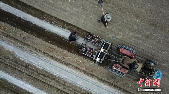 资料图:新疆巴音郭楞蒙古自治州(以下简称巴州)轮台县野云沟乡野云沟村棉农在种植棉花。确·胡热 摄