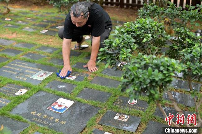 南宁宠物殡葬从业者:小生命也需大尊重
