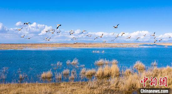 清澈的湖水与蓝天、白云、水鸟构成了一幅美丽水乡画卷。 年磊 摄