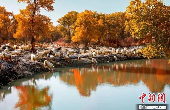 第一师阿拉尔市境内的秋日胡杨美景。(资料图)台州援疆指挥部供图