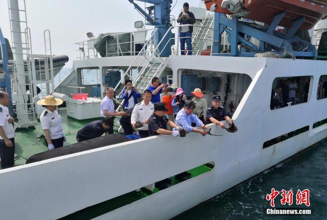 广西北海举行放流活动 数千只中国鲎投放大海