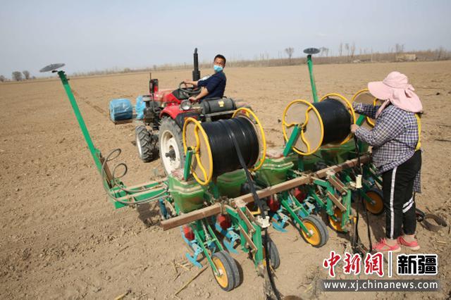 察布查尔县:春播玉米70万亩