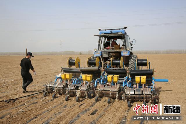 察布查尔县:订单甜菜助农增收 万亩大田蔬菜开始播种