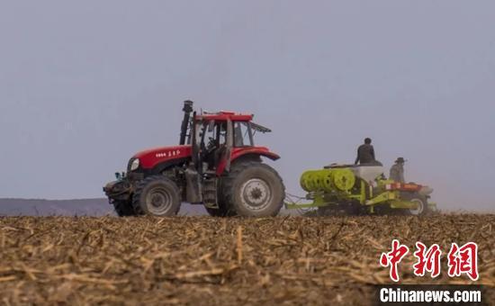 博乐市乌图布拉格镇的玉米田里正在进行免耕玉米的播种。 夏特克· 叶尔扎提 摄
