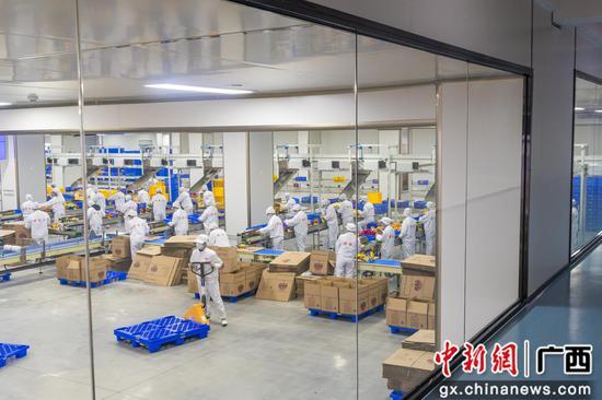 广西鹿寨与螺霸王深度合作打造螺蛳粉原料产业带