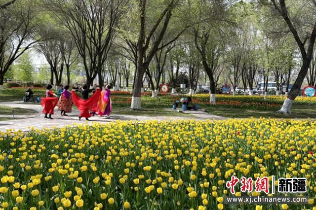 新疆石河子市满园春色 游人畅游赏景