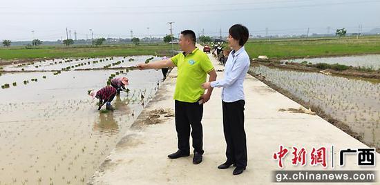 橫縣種糧大戶蒙世儉向郵儲銀行工作人員介紹今年優質水稻種植情況。羅先彬 攝