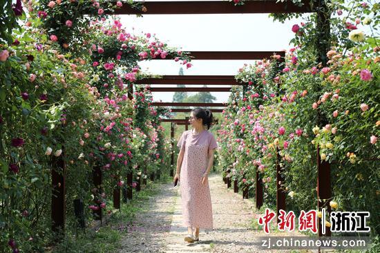 游客来玫瑰庄园打卡 何伟卫 摄