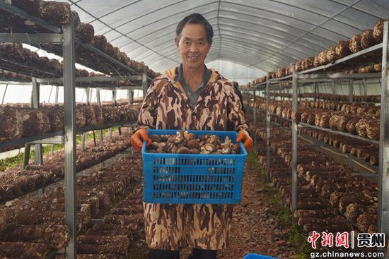 铜仁市松桃县普觉镇道塘村食用菌基地。