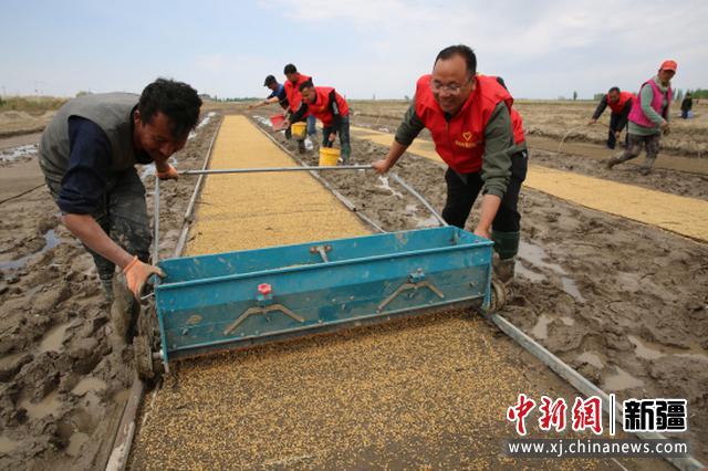 察布查尔县:驻村工作队帮稻农育秧