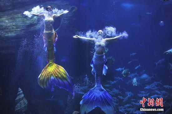 2021年5月4日,演员在贵州省贵阳市多彩贵州城极地海洋世界进行美人鱼表演。 中新社发 宁坚 摄 图片来源:CNSPHOTO