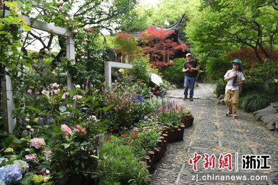 月季花等花卉吸引游人注意。 王剛 攝