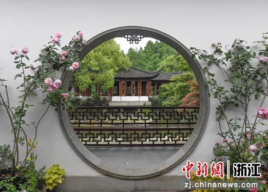 盛開的月季裝扮郭莊景觀。王剛 攝