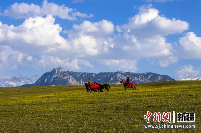 新疆察布查尔县骆驼驿站蓝天白云青草黄花