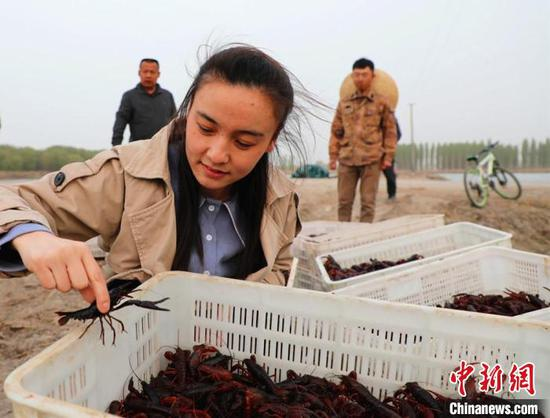 best365官网登录兵团有多个团场通过实验性养殖龙虾获得成功。 白克斌 摄